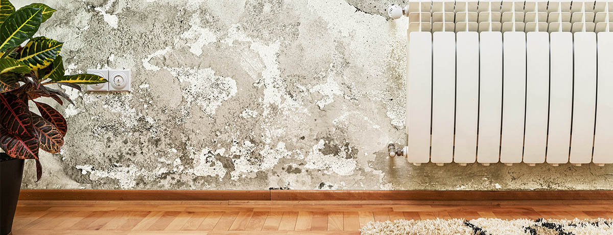 Mold vs  Mildew  When To Worry and When To Clean. Mold vs  Mildew  When To Worry and When To Clean   CertainTeed